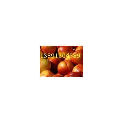 46-28油桃价格-陕西万亩黄壤46-28油桃,48油桃行情