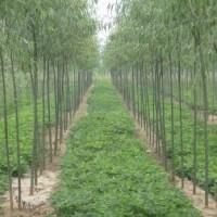 山西晋恒园林景观工程  绿化苗木